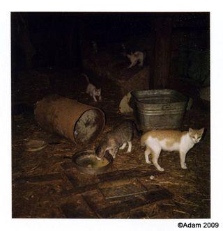 CatsBarn